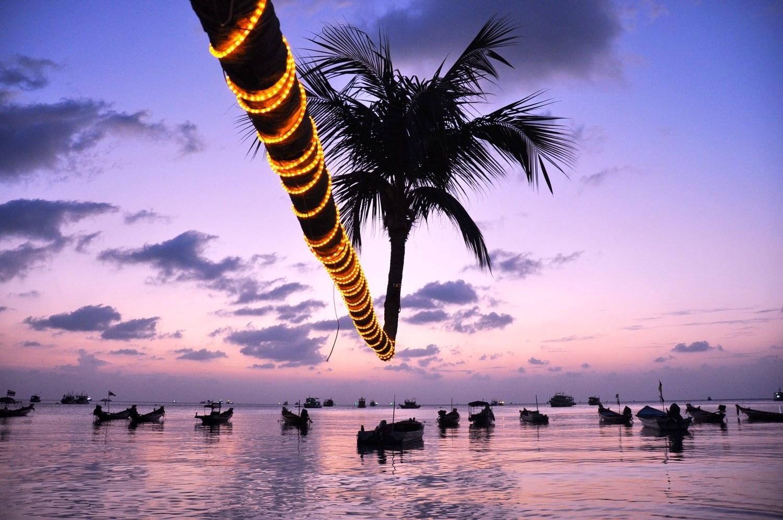 Koh Tao Sairee Beach Palm Tree Choose Dive School