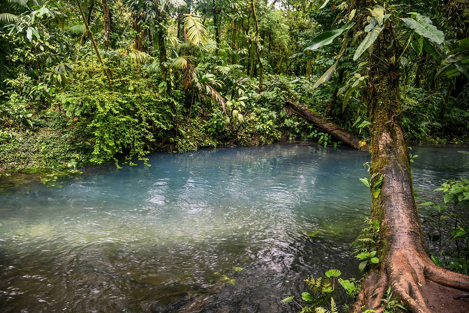Things to do in Arenal Costa Rica Rio Celeste River Minerals