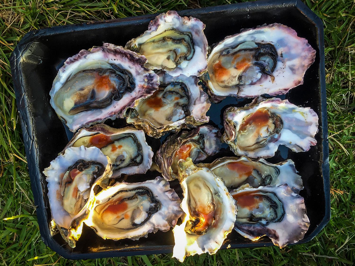 Things to do in Auckland Local Oysters