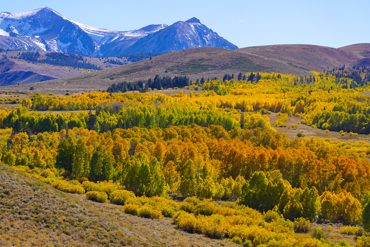 Fall colors at Conway Summit on CA Route 395