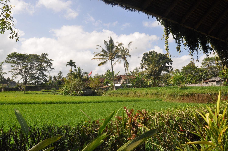Bali rice fields Ubud