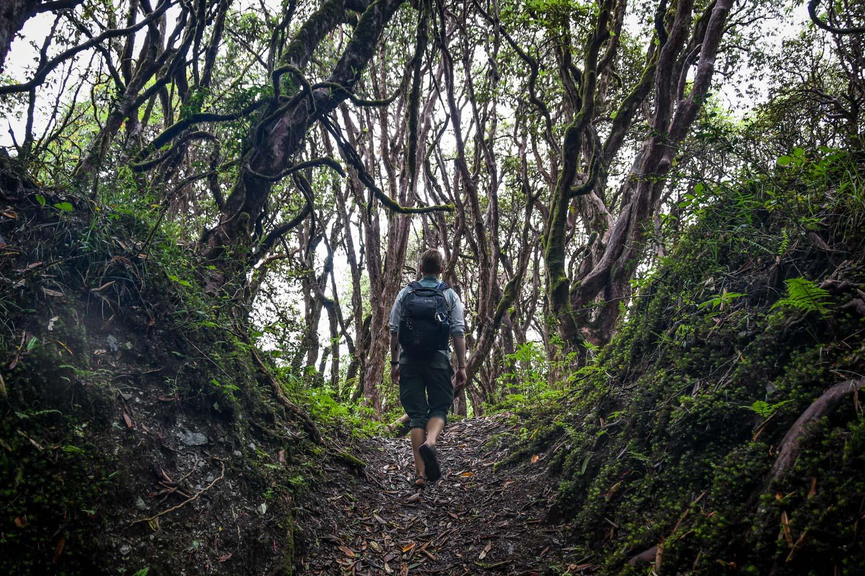 Mohare Danda Trek Rhododendron Forest