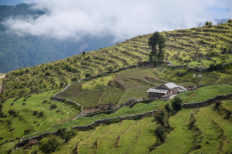 Mohare Danda Trek Terrace Farm