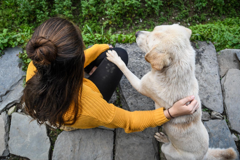 Mohare Danda Trek Trail Dog