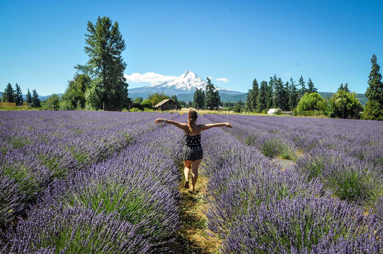 Road Trip Planner Tips Lavender Field Mount Hood