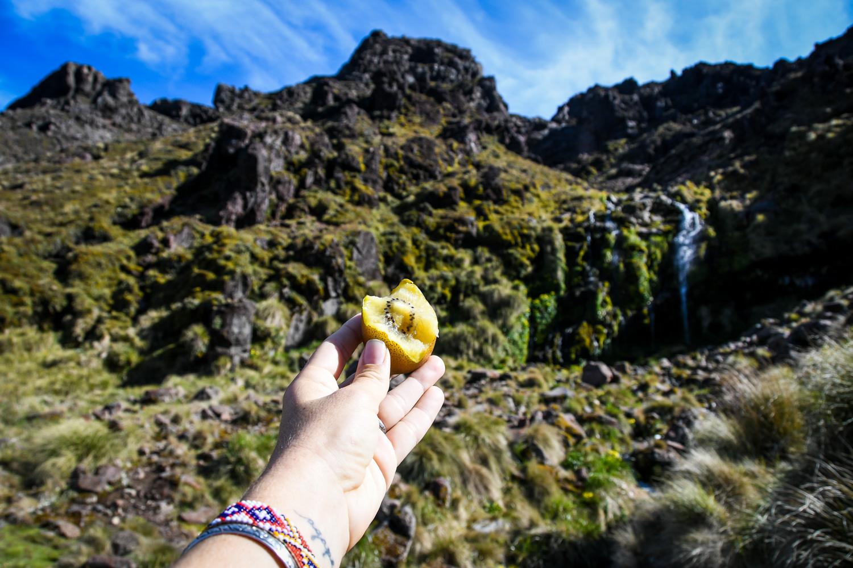 New Zealand Golden Kiwi