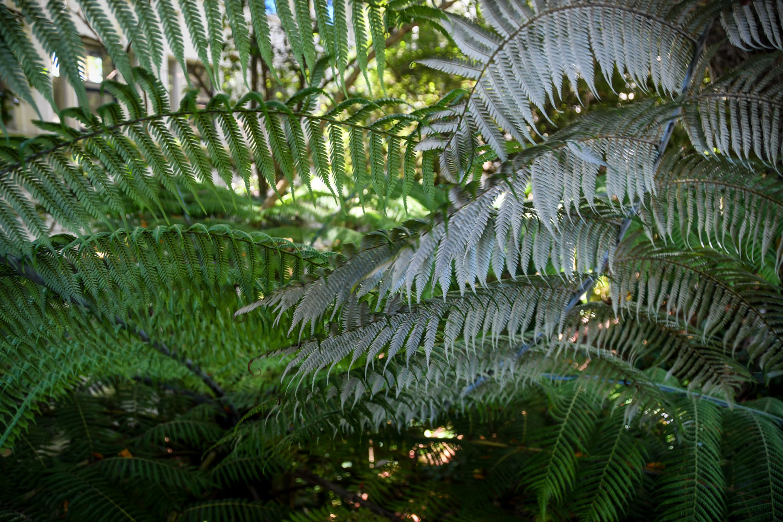 New Zealand Silver Ferns