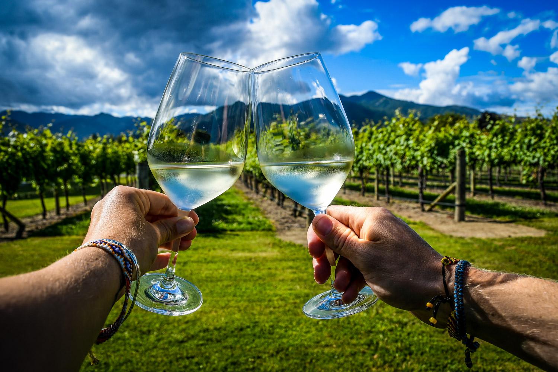 New Zealand Marlborough Vineyard Wine
