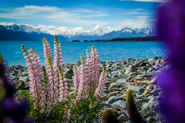 New Zealand Lake Pukaki