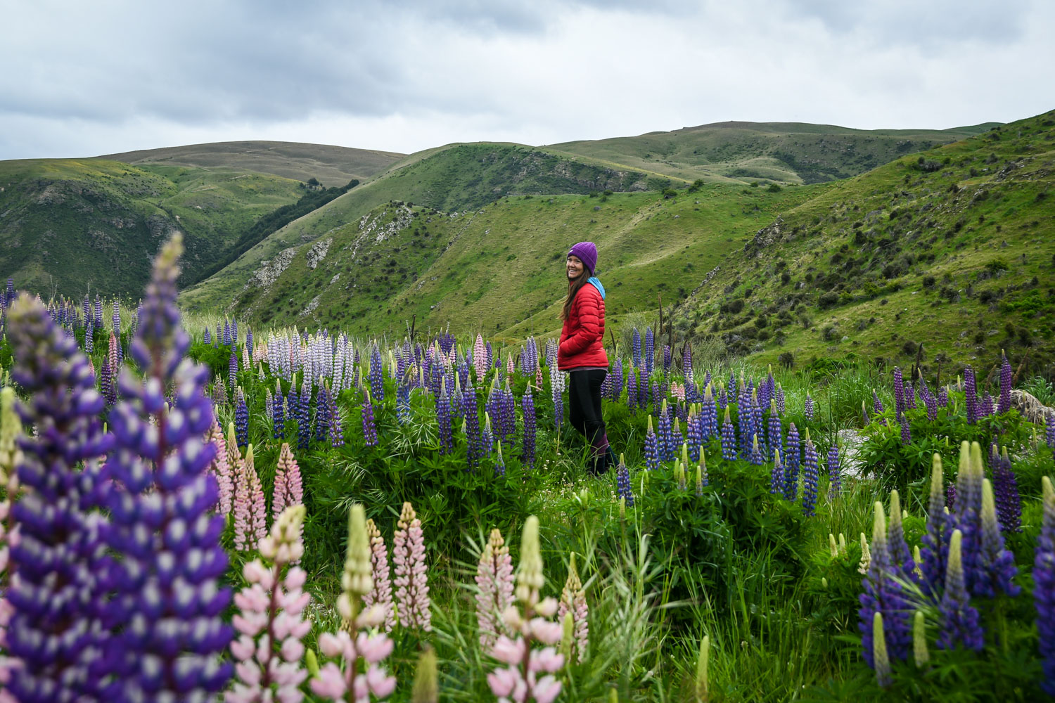 Those lupines might look beautiful, but they're actually an invasive species!