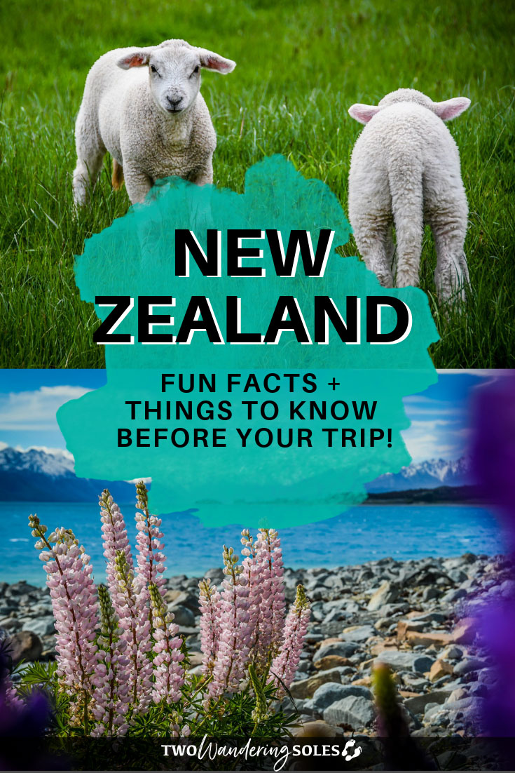 New Zealand Fun Facts and Things to Know Before your Trip