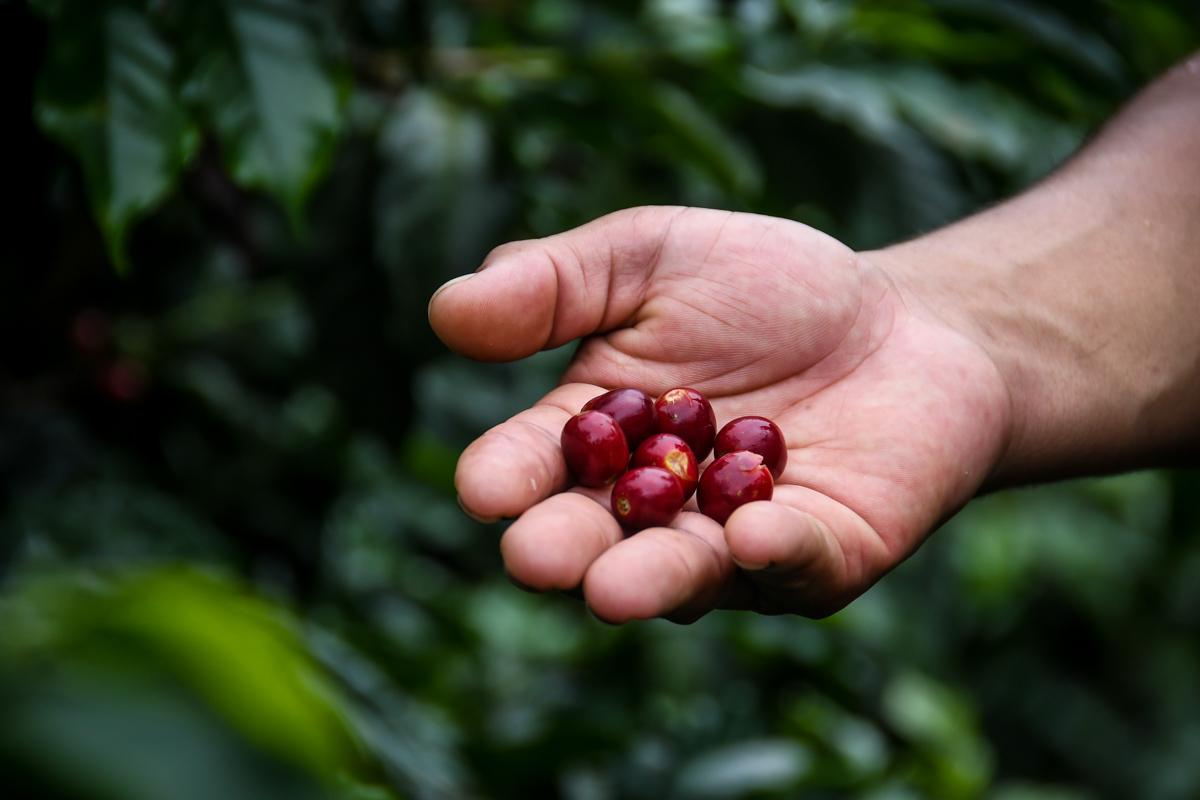 Things to do in Antigua Guatemala Coffee Farm