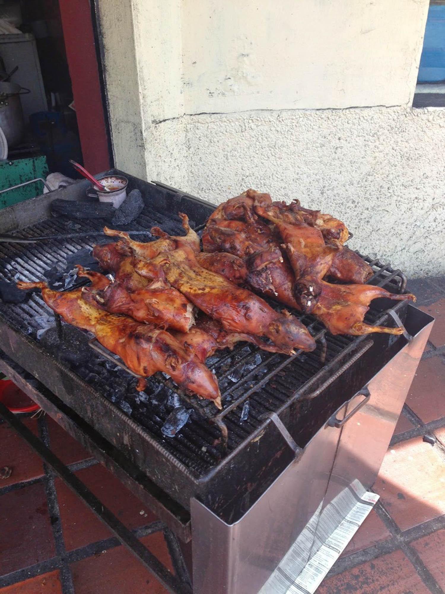 Cuy Guinea Pig Banos Ecuador