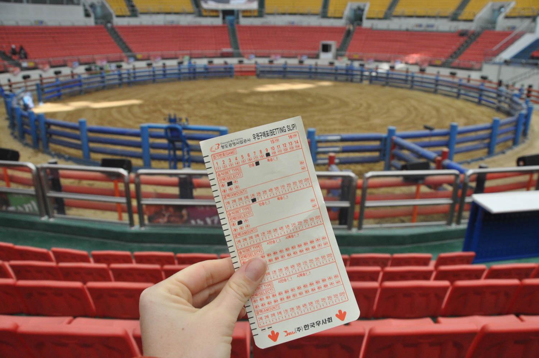 Korean Bullfighting