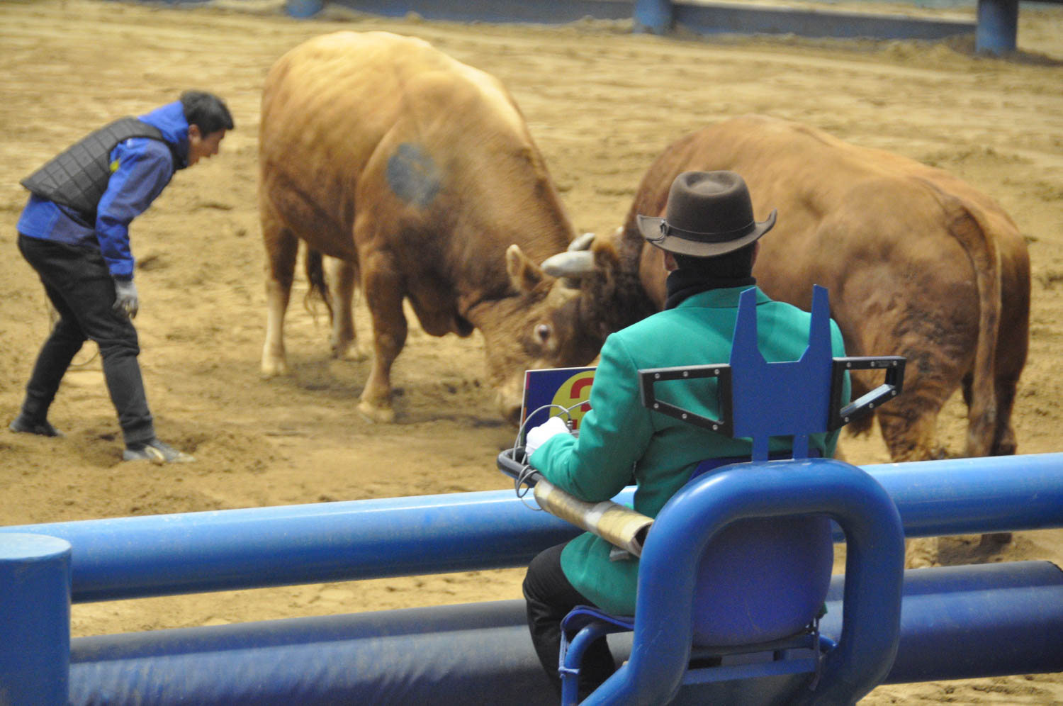 """There were several """"judges"""" observing the bullfights; though it didn't really seem like they did much."""