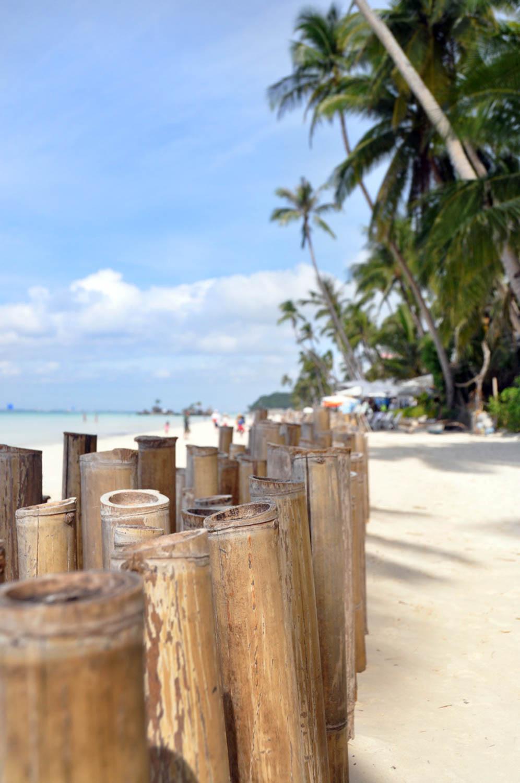 Boracay Palm Trees Bamboo