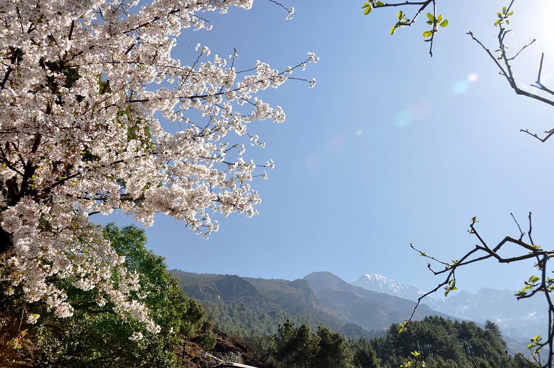 Flowers, sunshine & mountains