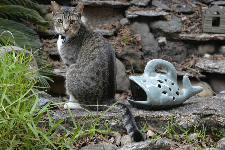 Reason for Housesitting Around the World Cat