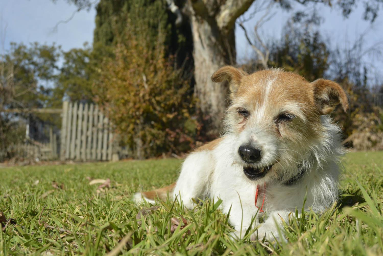 Reason for Housesitting Around the World Dog