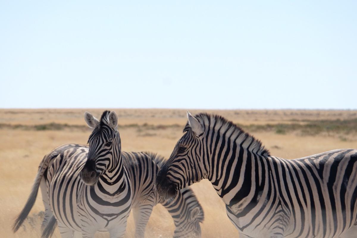 Things to Do in Namibia | Etosha National Park
