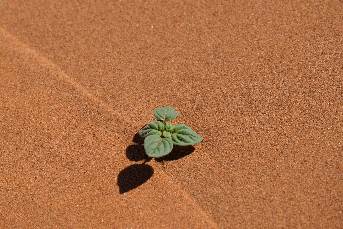 Sustainable Travel in Namibia