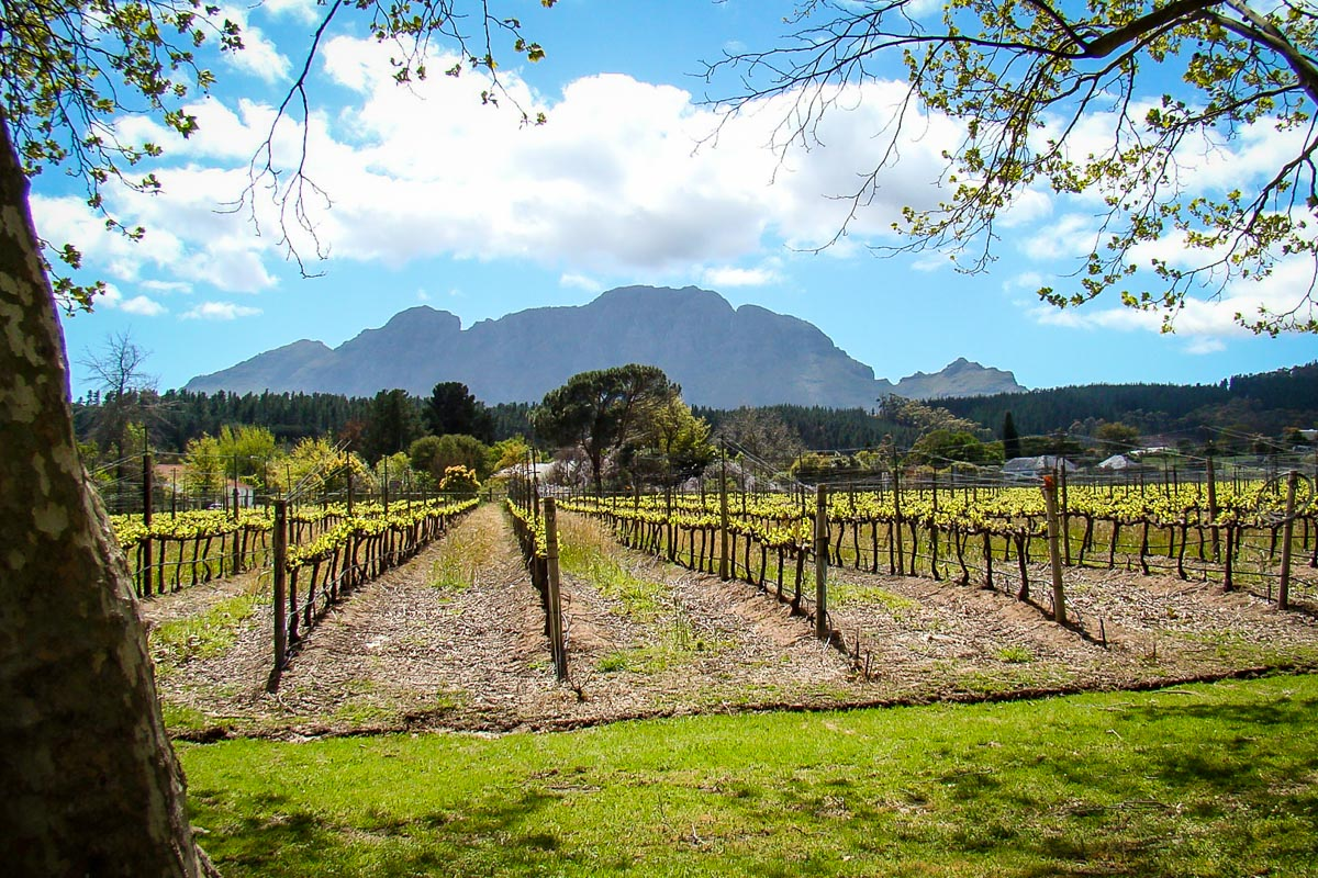 Things to do in Cape Town   Cape Winelands