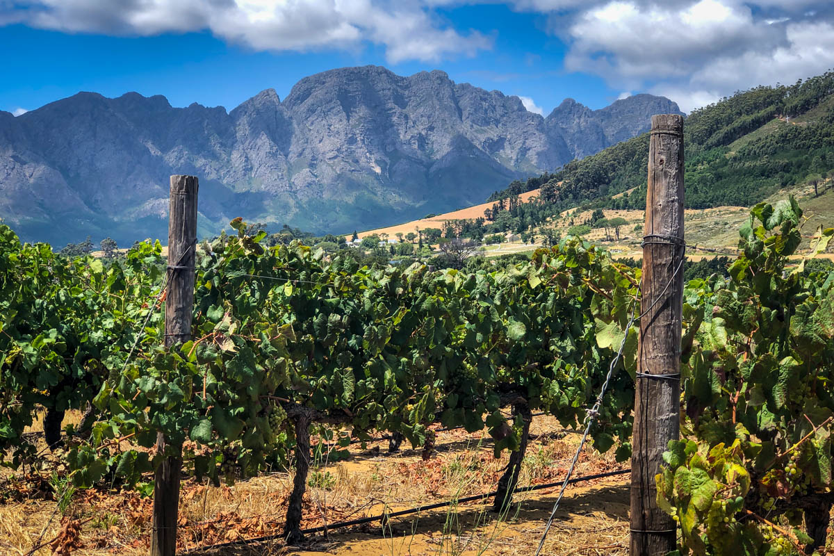 Things to do in Cape Town   Wine Tour