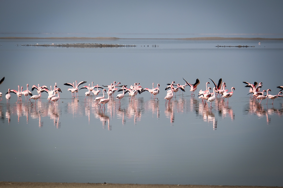 Things to do in Namibia | Flamingos in the Salt Works