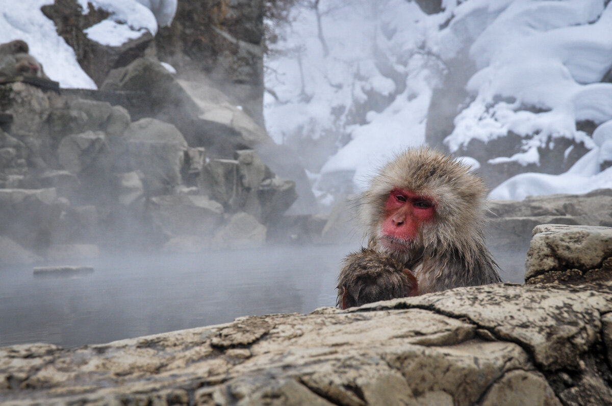 Best Time to Visit Japan Snow Monkey Hot Spring