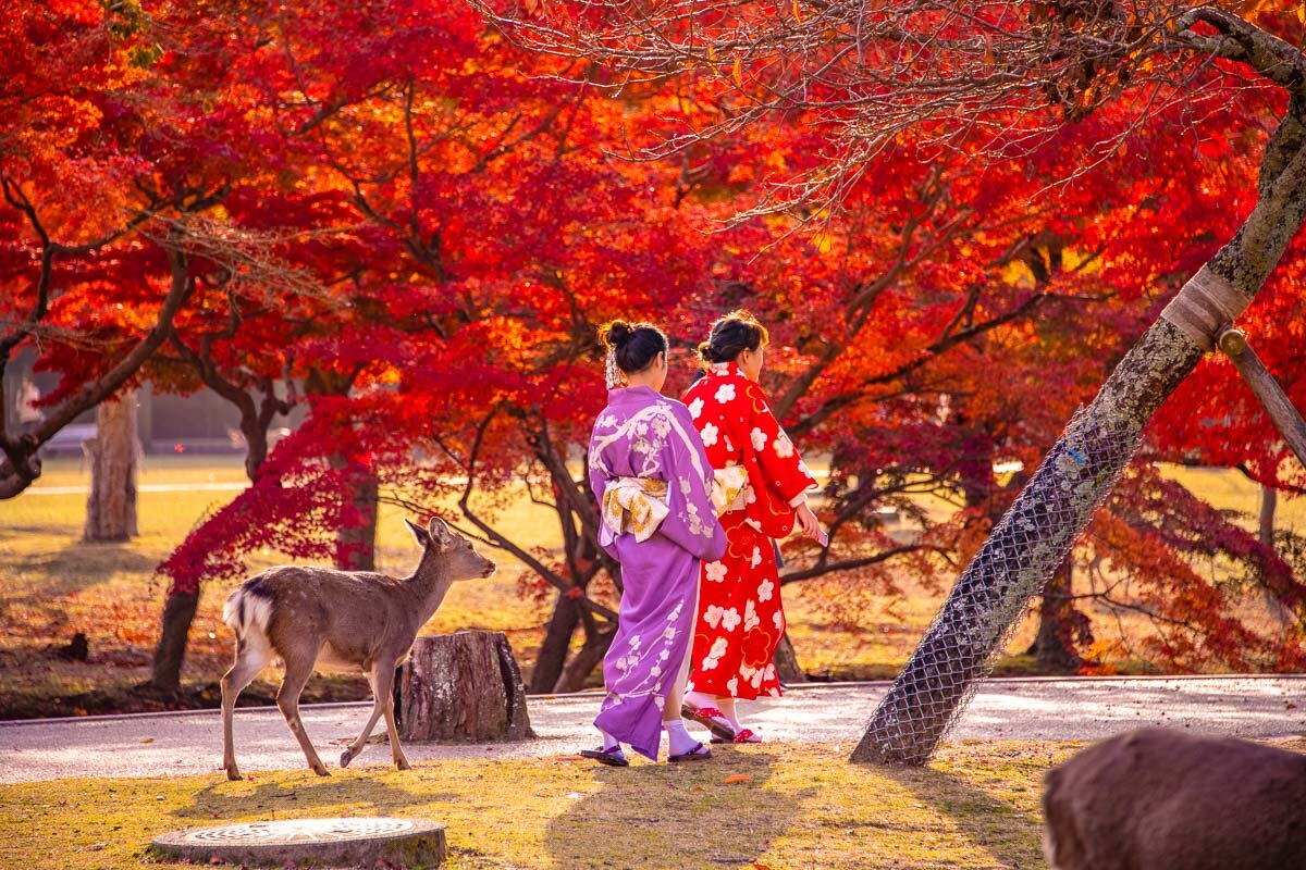 Nara in Autumn - Photo Credit: Alex Waltner / Swedishnomad.com