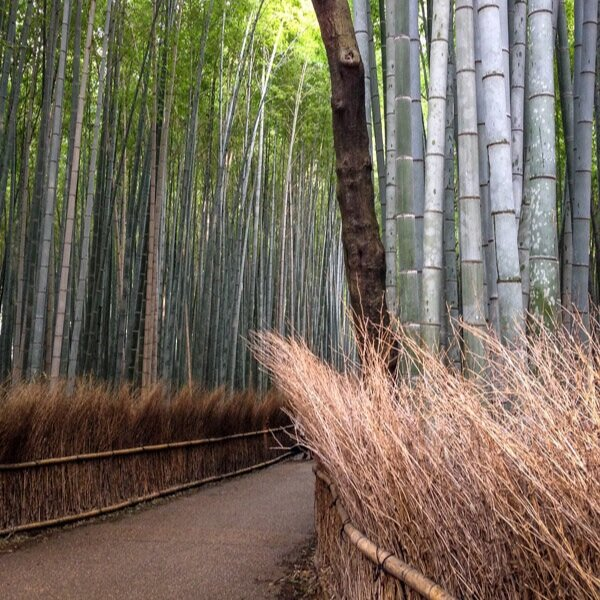 Best Time in Japan Bamboo Forest