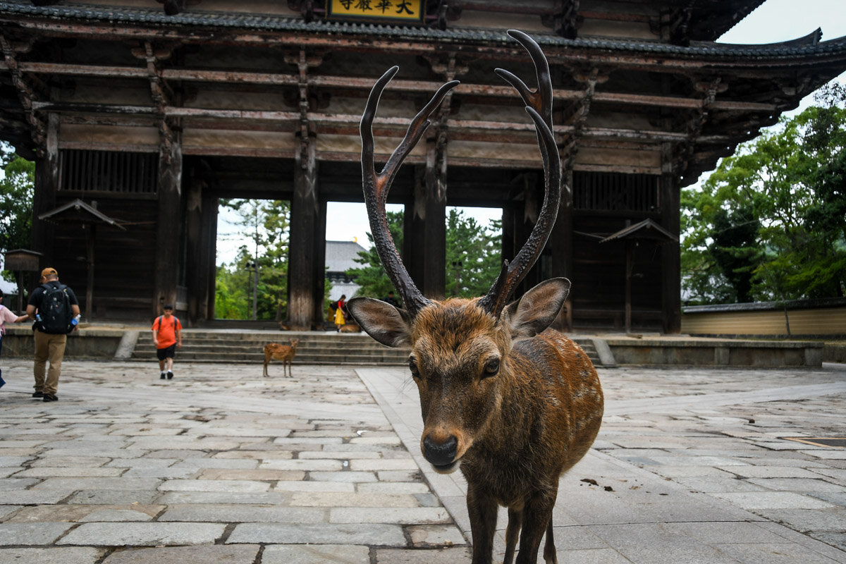 Things to Do in Osaka Japan Day Trip to Nara Deer and Temples