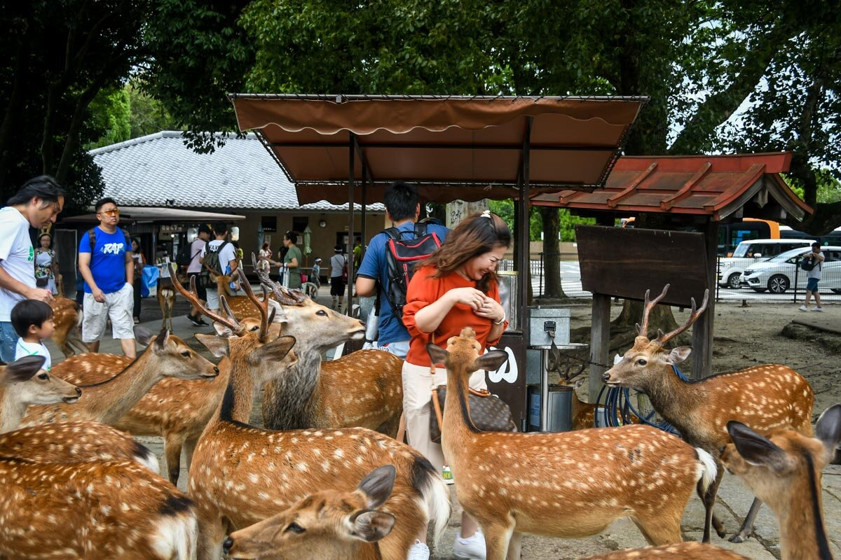 Things to Do in Osaka Japan Day Trip to Nara Why Not to feed Deer