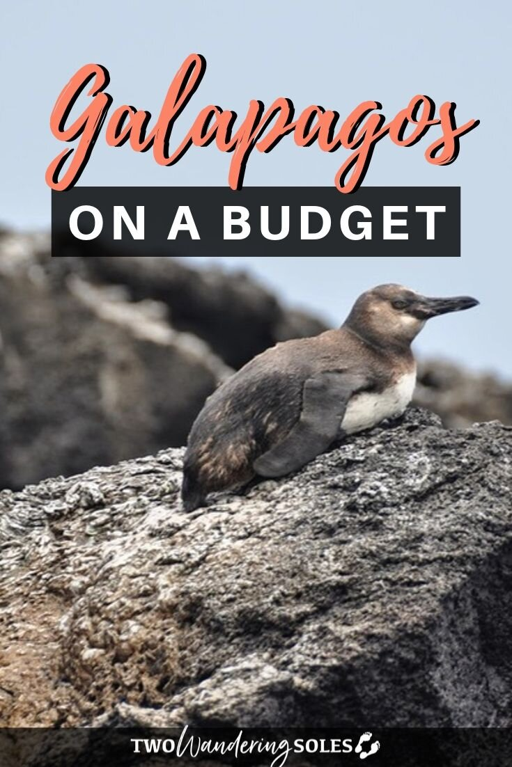 Galápagos on a Budget