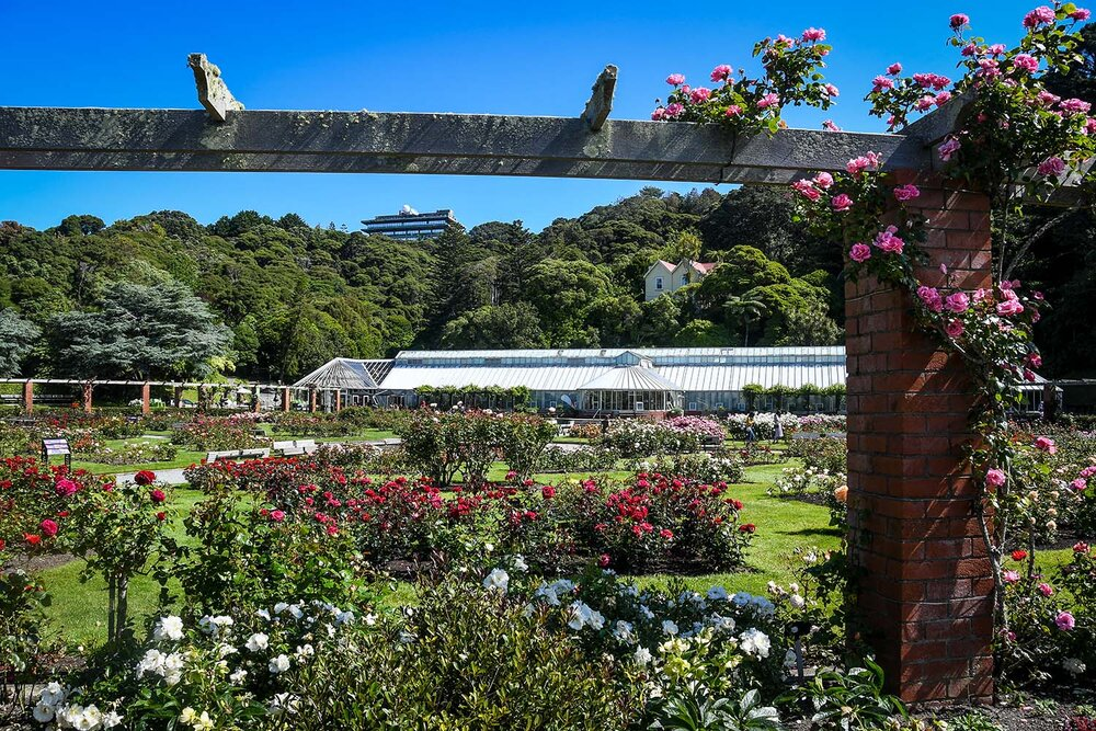 Best Time to Visit New Zealand | Wellington Botanical Gardens