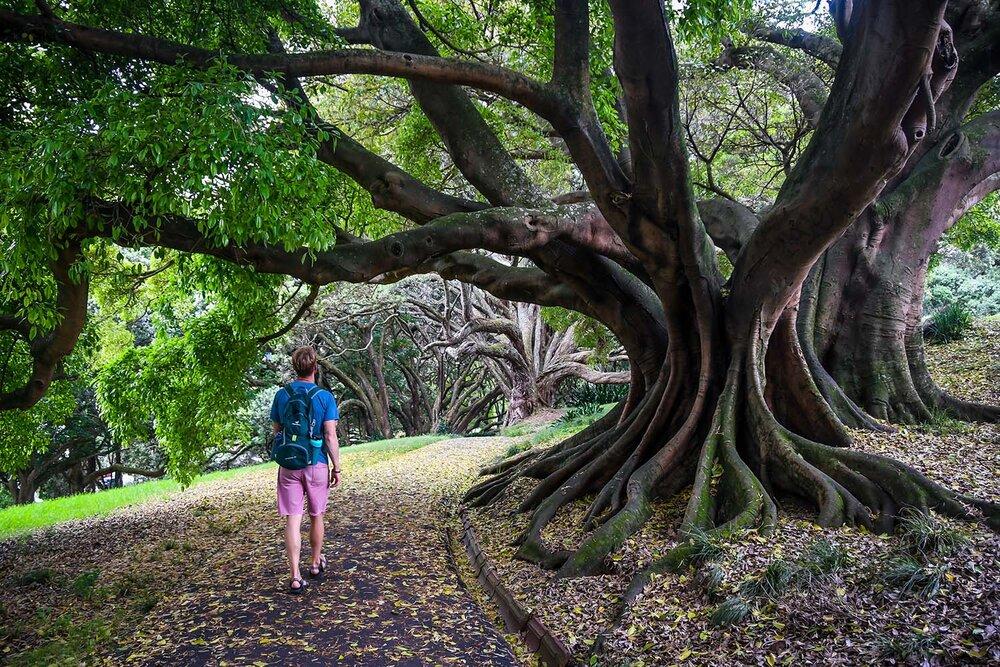 Best Time to Visit New Zealand | Auckland Albert Park
