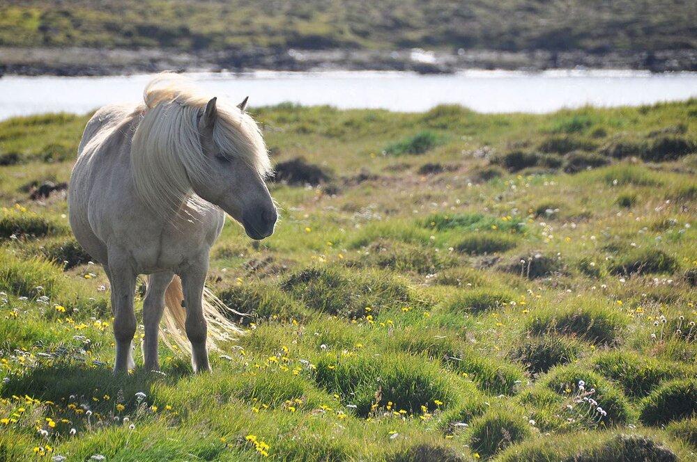 Best Time to Visit Iceland | Icelandic Horses