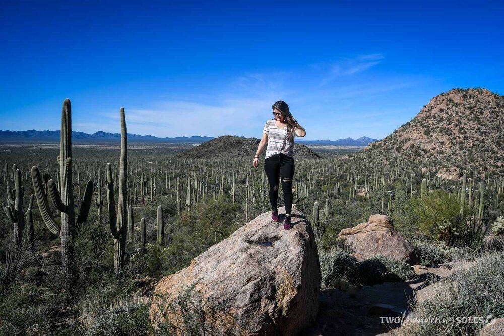 Things to Do in Tucson Saguaro National Park