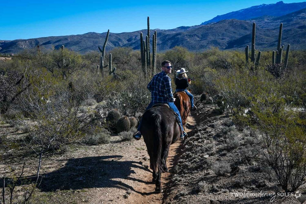 Things to Do in Tucson Houston's Horseback Riding