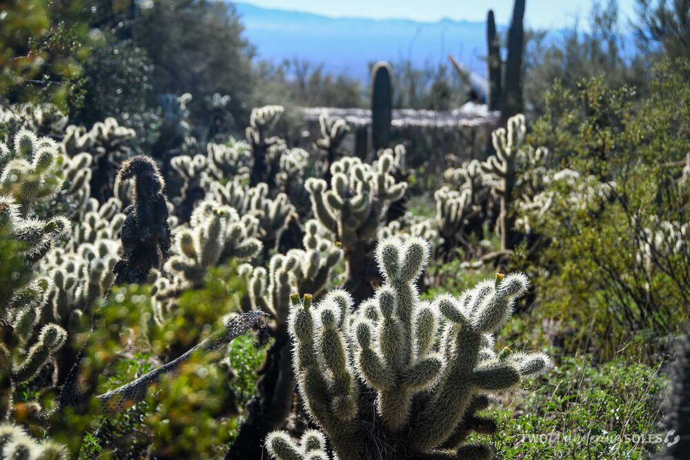 Things to Do in Tucson Arizona-Sonora Desert Museum