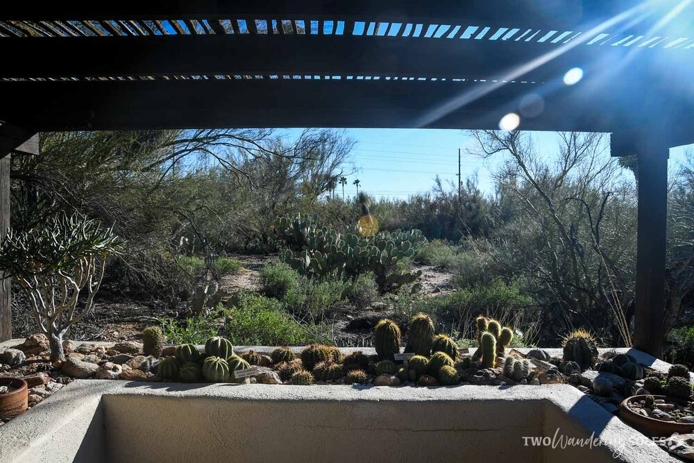 Things to do in Tucson Tohono Chul Gardens