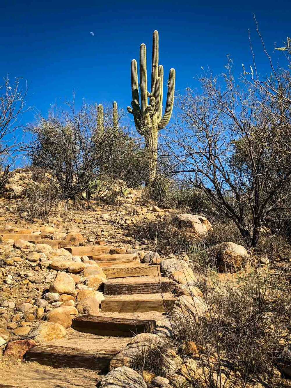 Catalina State Park | Photo Credit: My Mom ;)