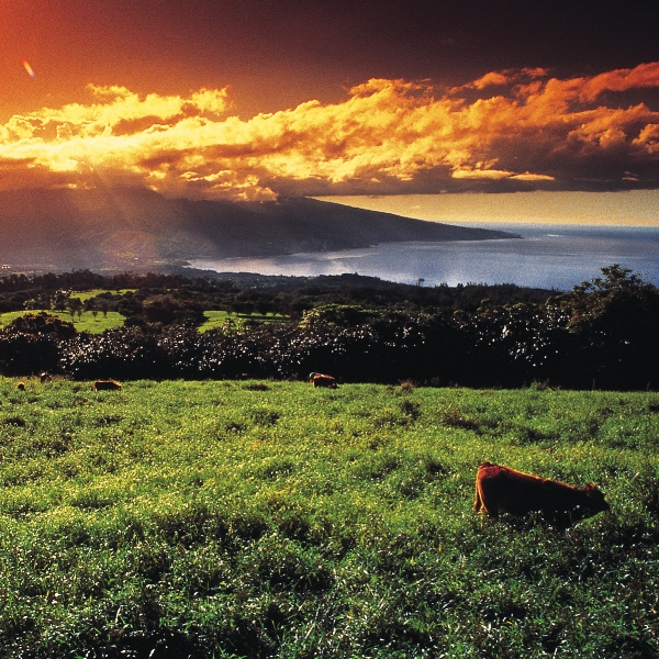 sunset-bay.jpg