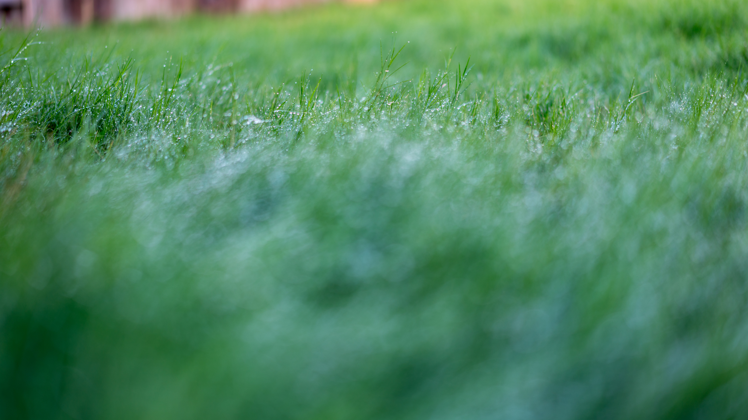 dewy grass-10.jpg
