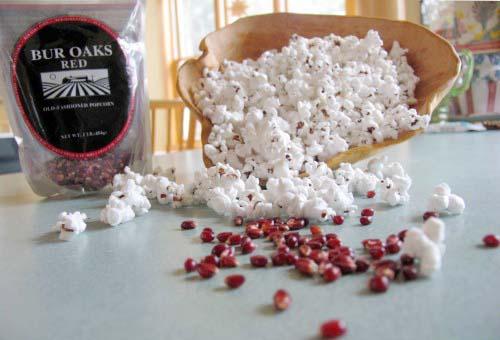 popcorn-bur-oaks_8789.jpg