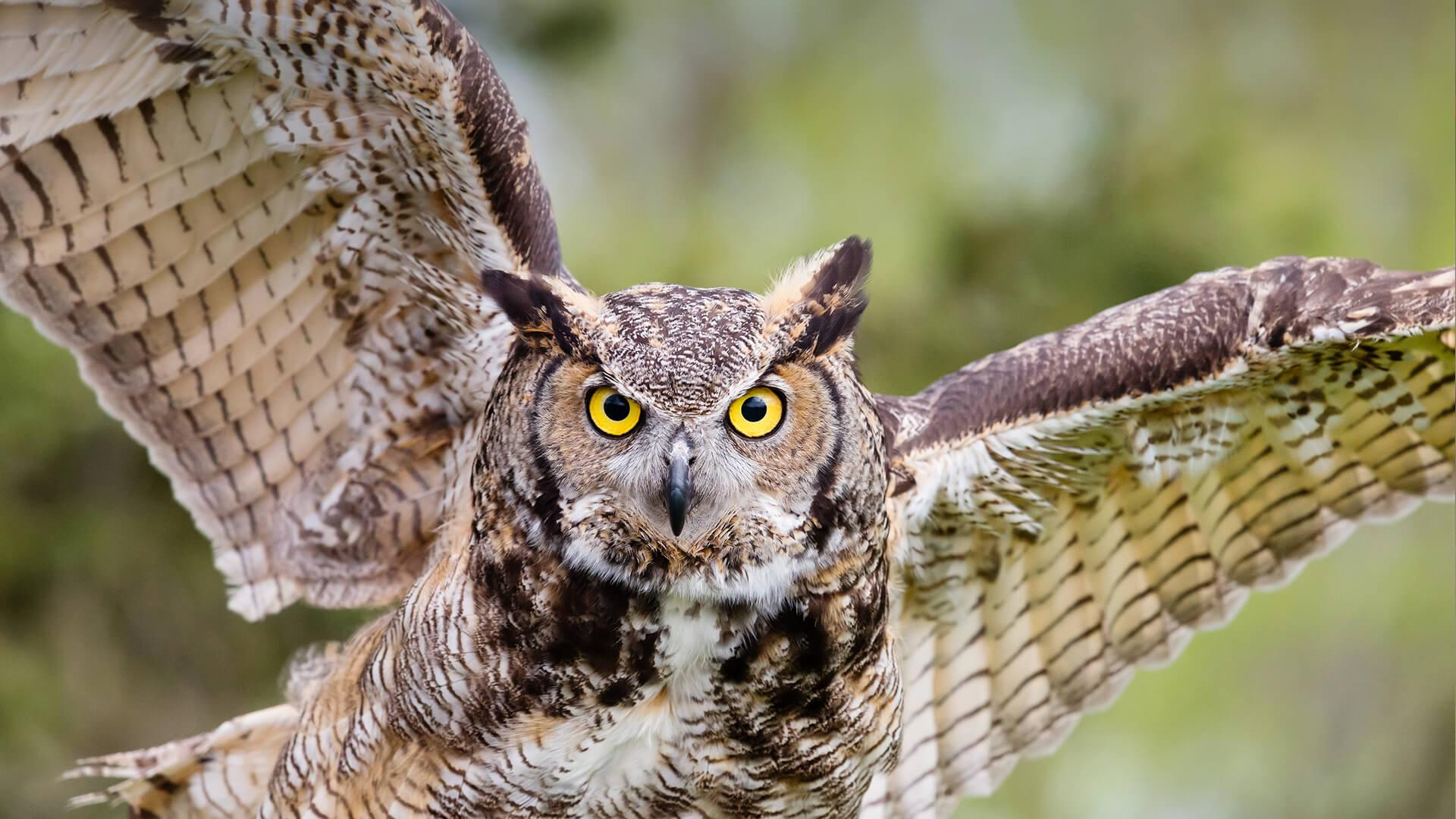 animals_hero_owl.jpg