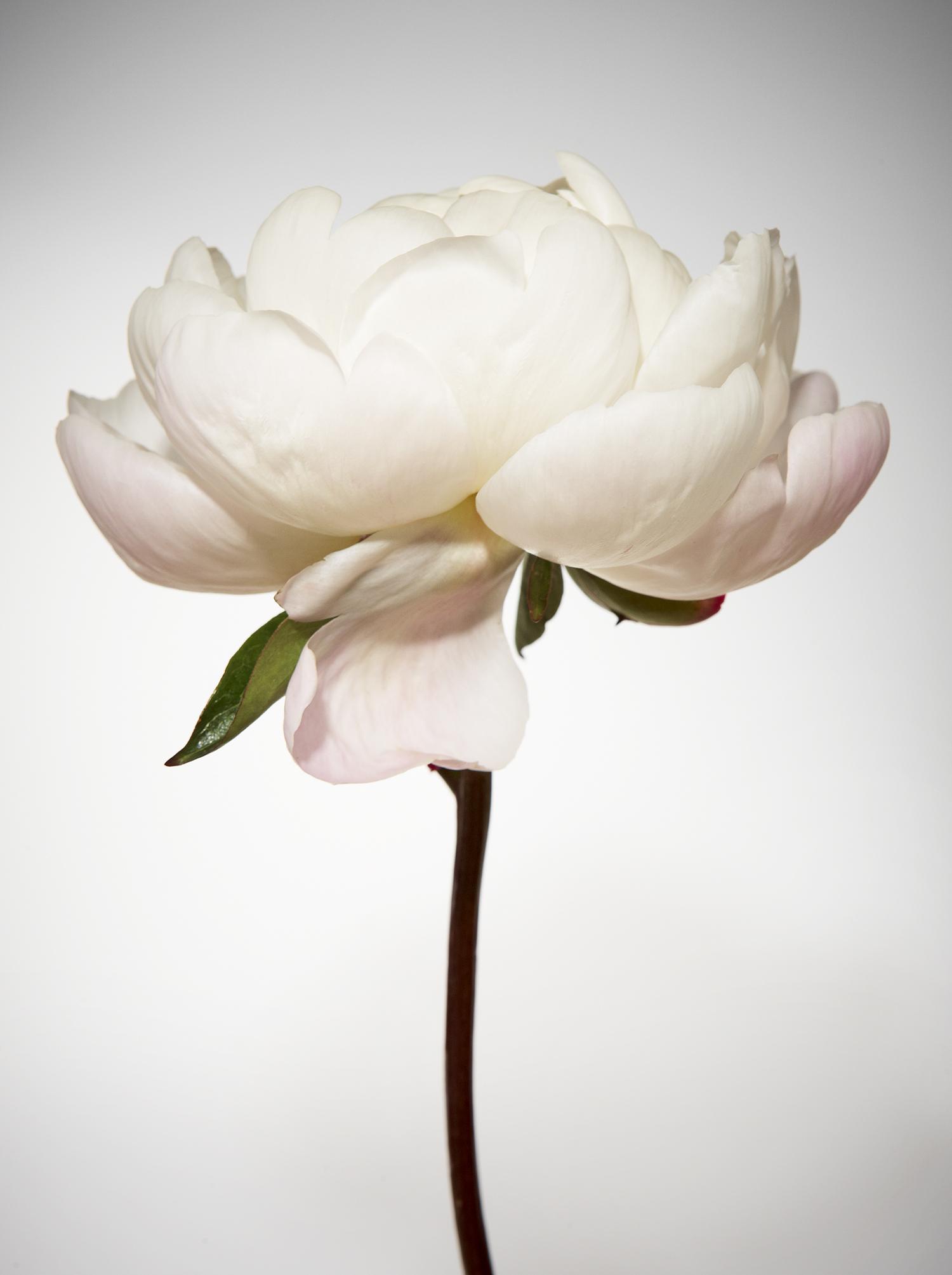 LUCKY BLACKBERRY & ROSE PERFUME 6548 2.jpg