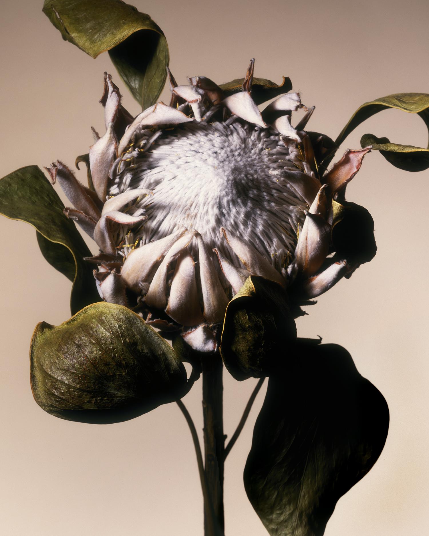dryflower1.jpg