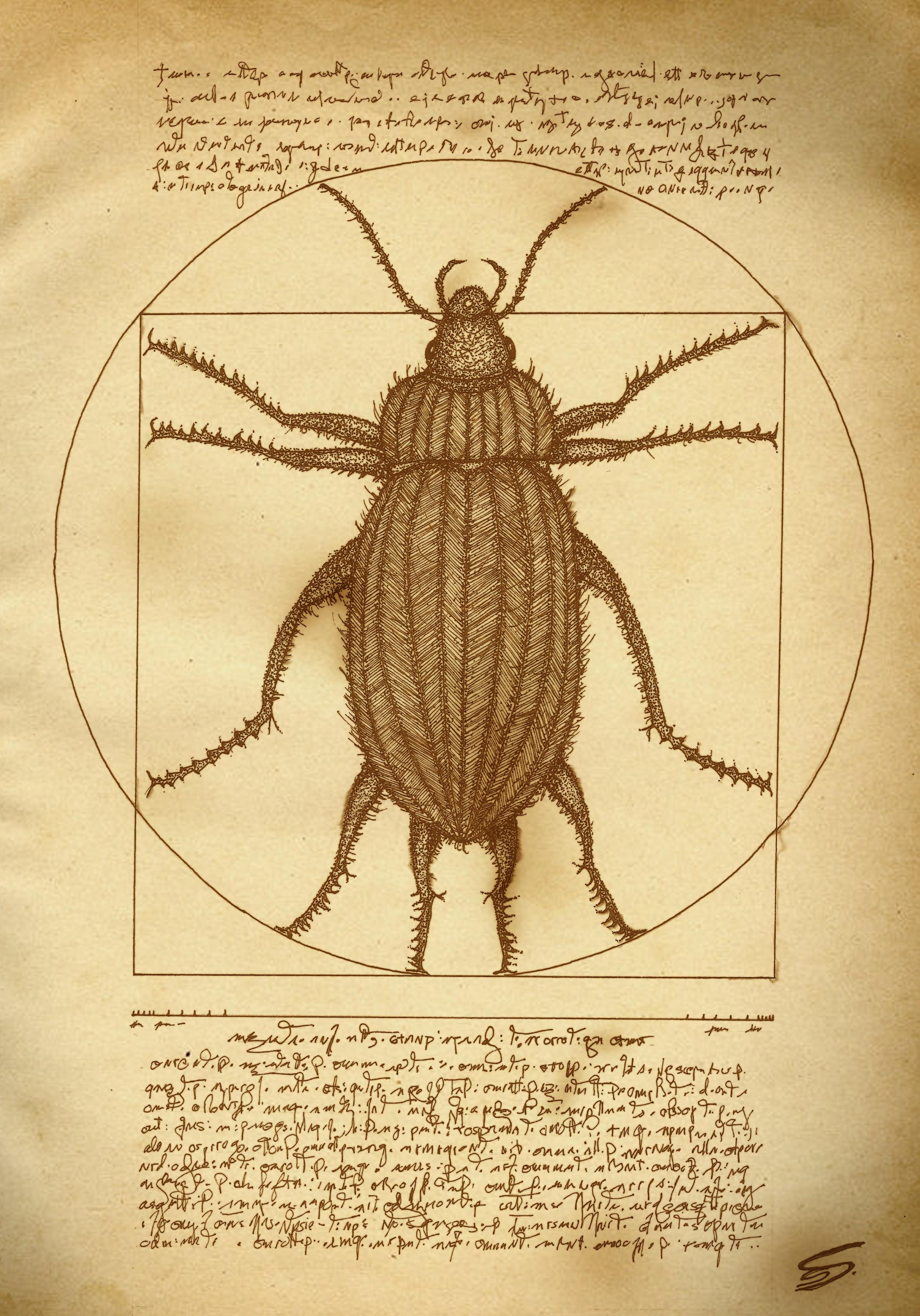 vitruvian bug.jpg