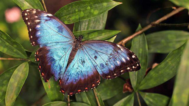 Die Zahl der Schmetterlinge schrumpft besonders dramatisch.